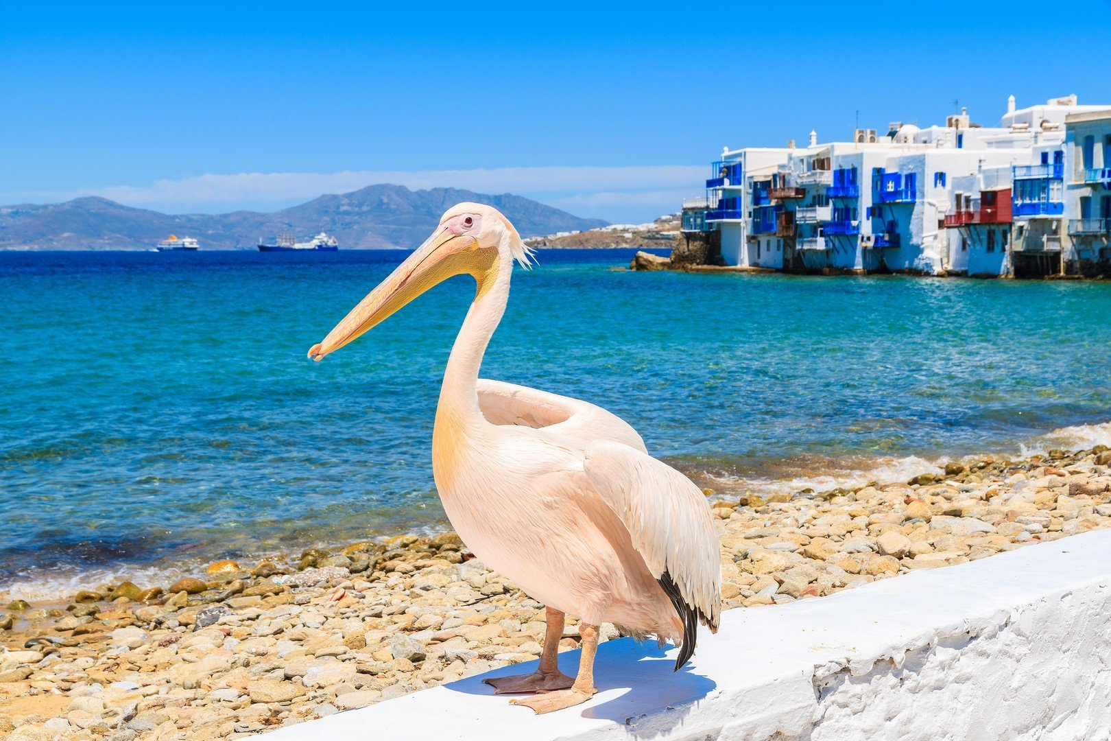 Famous pelican bird posing for photos against beach in Mykonos town shutterstock_428318647